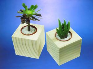 Maceteros de madera pino radiata con suculentas